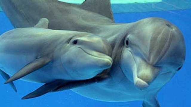 скачать игру про дельфинов - фото 7